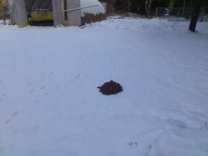 Hüge lim Schnee